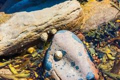 Pietre nel mare dopo la marea Fotografia Stock Libera da Diritti