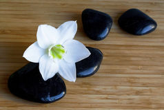 Pietre nere della stazione termale con il fiore bianco Fotografie Stock Libere da Diritti