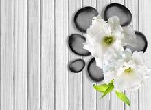 Pietre nere della stazione termale con il fiore su fondo di legno bianco Fotografia Stock