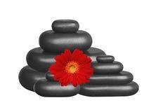 Pietre nere della stazione termale e fiore rosso della gerbera isolati su bianco Immagini Stock