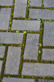Pietre per lastricati con muschio e vegetazione nelle crepe fotografia stock libera da diritti