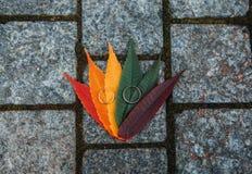 Pietre scure leggere delle foglie variopinte delle fedi nuziali immagini stock libere da diritti