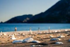 Pietre sul primo piano della spiaggia della sabbia Immagini Stock Libere da Diritti