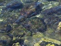 Pietre variopinte in acqua Fotografia Stock