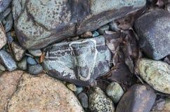 Pietre variopinte su una sponda del fiume della montagna, backg variopinto di struttura Fotografia Stock Libera da Diritti