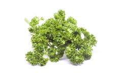 Pietruszka liście być karmowymi składnikami Obrazy Royalty Free