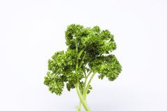 Pietruszka liście być karmowymi składnikami Fotografia Stock