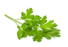 Pietruszki aromatyczny ziele zdjęcie royalty free