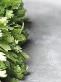 Pietruszki aromatyczny ziele obrazy stock