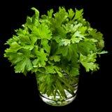Pietruszki aromatyczny ziele w szkle Zdjęcie Stock