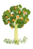 pietruszki selerowy drzewo Obrazy Stock