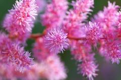 Pieza de flores rosados de la flor. imagen de archivo libre de regalías