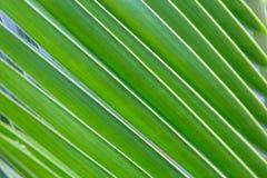 Pieza de la palmera Imagen de archivo
