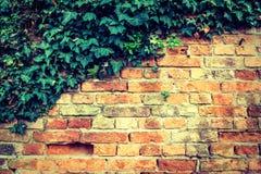 Pieza de la pared antigua vieja con las hojas verdes imagenes de archivo