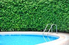 Pieza de la piscina y de la cerca de la planta Imagen de archivo libre de regalías