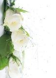 Pieza del capítulo con las rosas blancas Imágenes de archivo libres de regalías