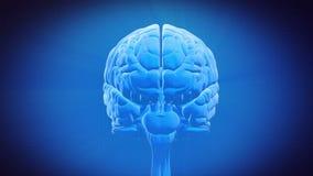 Pieza del cerebro - HIPOCAMPO stock de ilustración