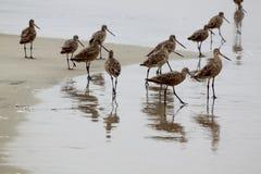Pifferai nella sabbia fotografia stock