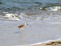Pifferaio della sabbia che cammina nell'oceano Fotografia Stock Libera da Diritti