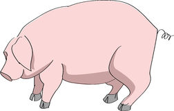 Pig. Vector shape of pig simple illustration Royalty Free Stock Photo