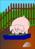 Pig. Animal agriculture food farm royalty free illustration