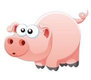 Pig Arkivbild