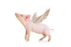 pig Royaltyfria Bilder
