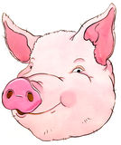 Pig. Smiling pig head made watercolor Royalty Free Stock Photos