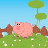 Pig Stock Image