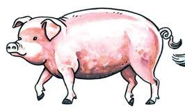 Pig animal Royalty Free Stock Image
