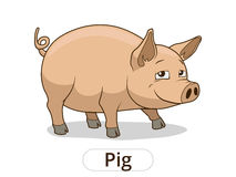 Pig animal cartoon illustration for children Stock Images
