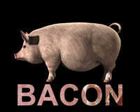 Pig And Bacon. An image of a pig with a sliced bacon overlay texture on the word bacon Royalty Free Stock Photography