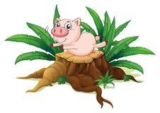 A pig balancing above a wood Royalty Free Stock Photo
