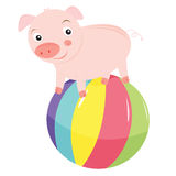 Pig on a ball Royalty Free Stock Image