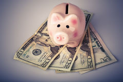 Pig bank on dollar banknotes Stock Photography