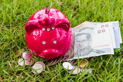Pig bank on grass stock photography