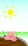 Pig Bathing In The Sun. Pig bathing mud below the sun Stock Photography