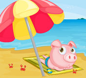 Pig at the beach Royalty Free Stock Photography