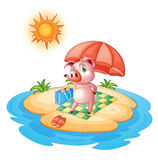 A pig at the beach Royalty Free Stock Photo