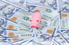 Pig on 100 bills Royalty Free Stock Photos