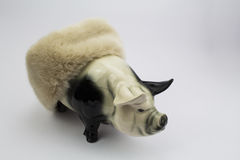 Pig in Blanket Stock Photography