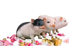 Pig boar with cherry blossom flower, 2019 Chinese New Year stock images