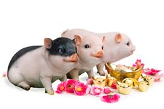 Pig boar with cherry blossom flower, 2019 Chinese New Year zodiac stock images