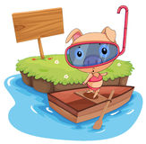 Pig and boat Royalty Free Stock Image