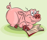 A pig with a book. Funny pig reading a book Stock Photography