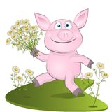 Pig with a bouquet of camomiles Royalty Free Stock Images