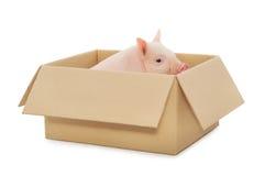 Pig in box stock photos