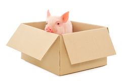 Pig in box Royalty Free Stock Images