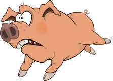 Pig. Cartoon Stock Photo