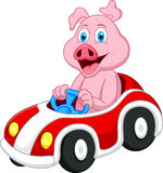 Pig cartoon driving car Stock Photography